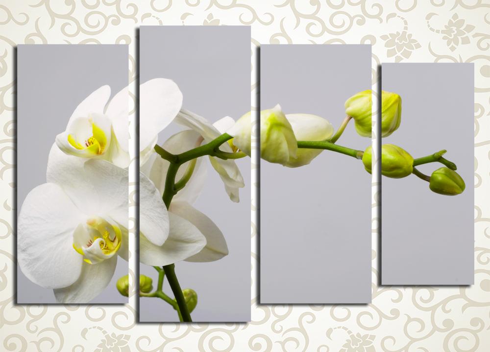 Модульная картина Белая орхидея на сером фоне