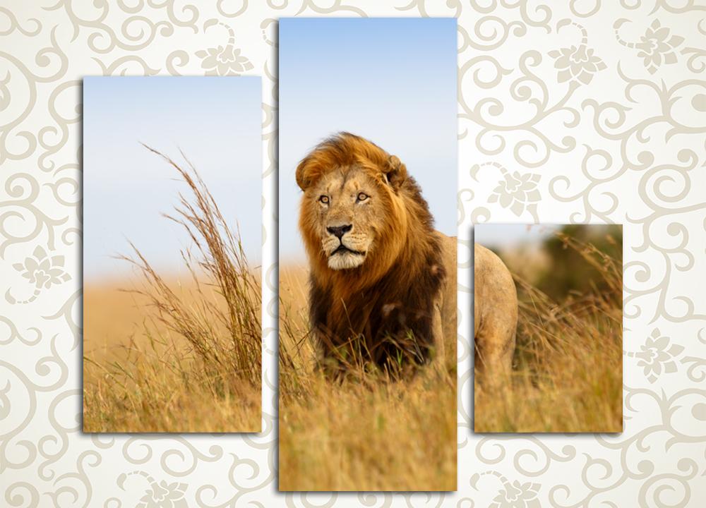 Модульная картина Гордый вожакЛюбители животных по достоинству оценят великолепие модульной картины «Гордый вожак. Она изображает царственного предводителя львиного прайда, запечатленного в его естественной среде обитания – среди африканских равнин. Это полотно отлично передаст гордый и сильный образ его обладателя и станет решающим элементом оформления интерьера гостиной, холла, прихожей, спальни, а также рабочего кабинета. Картина состоит из 3 вертикальных модулей различного размера. Каждый из них изготовлен на качественном подрамнике из натуральной сосны и вручную обтянут холстом.<br>