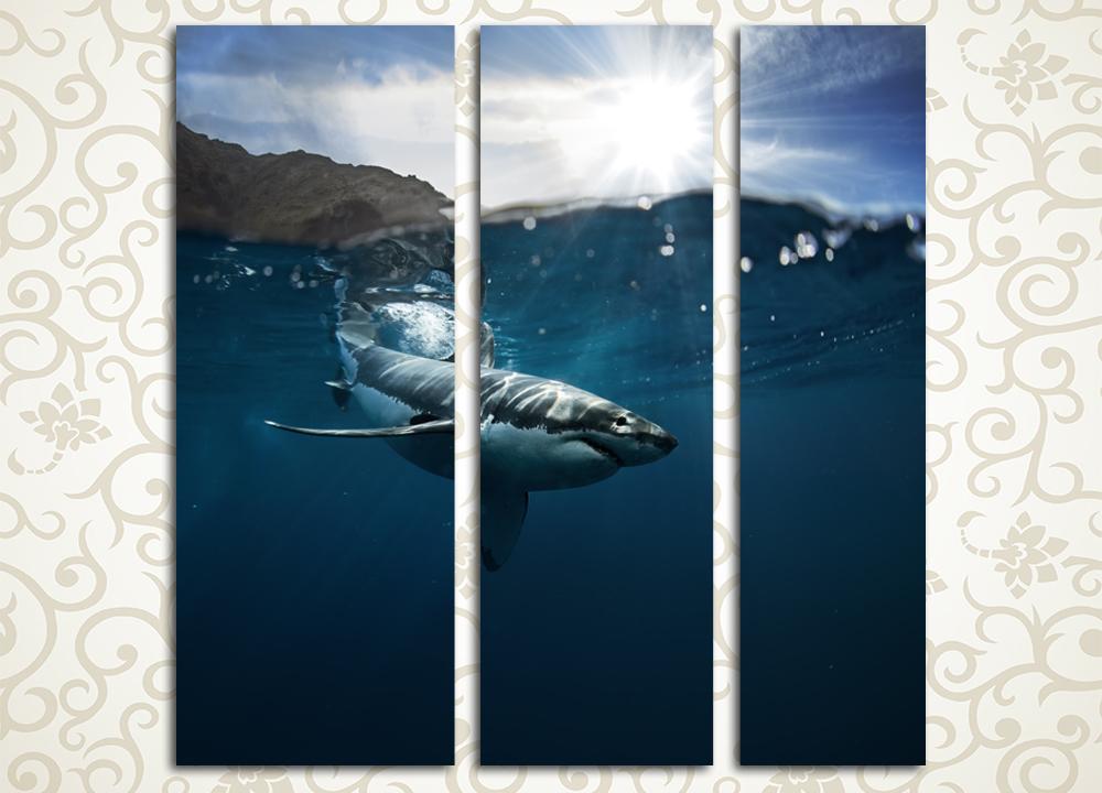 Модульная картина Морской хищник