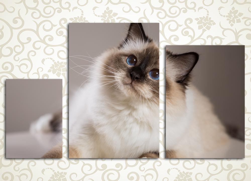 Модульная картина Пушистая красавицаОбаятельная кошка, изображенная на модульной картине «Пушистая красавица», обязательно понравится любителям этих домашних питомцев. Полотно станет отличным украшением спальни, кухни, прихожей, холла и гостиной современного уютного дома. Картина состоит из 3 вертикальных модулей, каждый из которых вручную обтянут холстом. Высокотехнологичные латексные краски надежно защитят картину от влажности и солнца, а также мелких царапин. Пристальный контроль качества сборки картины обеспечит весьма продолжительный срок ее эксплуатации.<br>