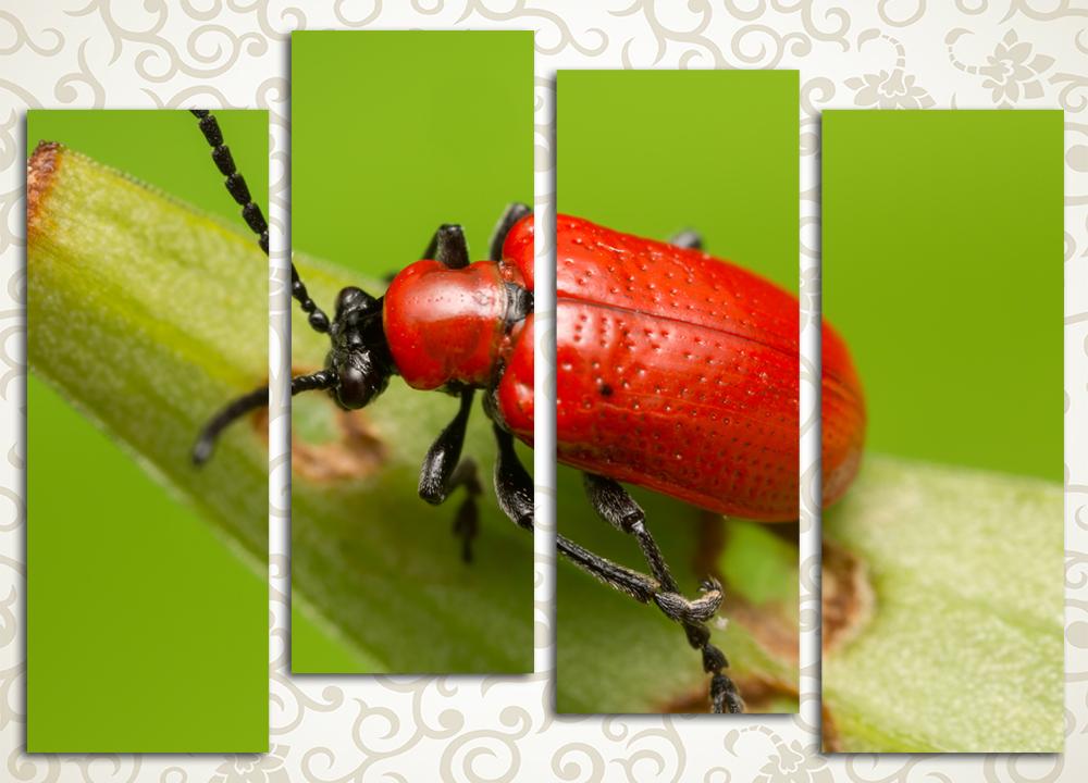 Модульная картина Красный жук