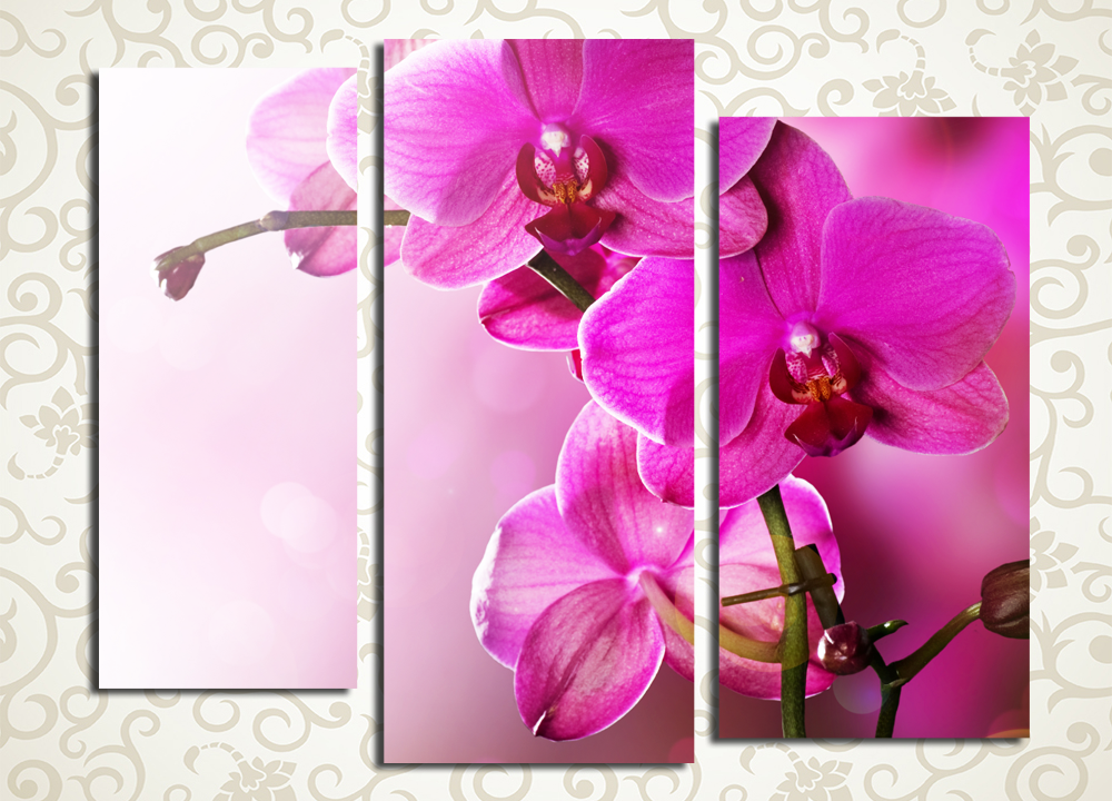 Модульная картина Цветущая орхидея