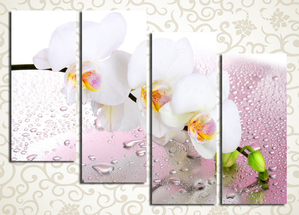 Модульная картина Нежная орхидея