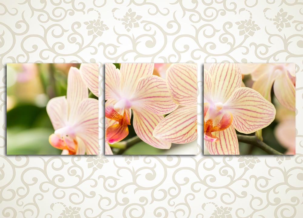 Модульная картина Чарующие орхидеи