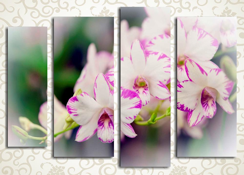Модульная картина Нежность дикой орхидеи