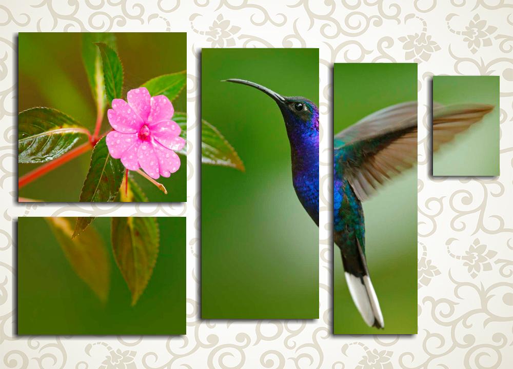 Модульная картина Полет колибри