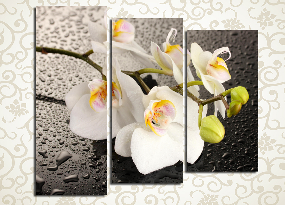 Модульная картина Взгляд орхидеи