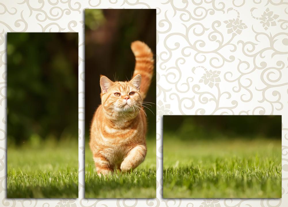 Модульная картина Кошка на прогулке