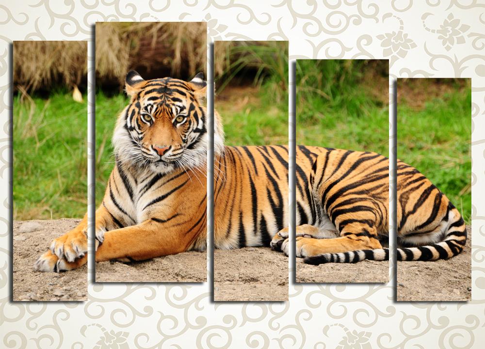 Модульная картина Серьёзный тигр