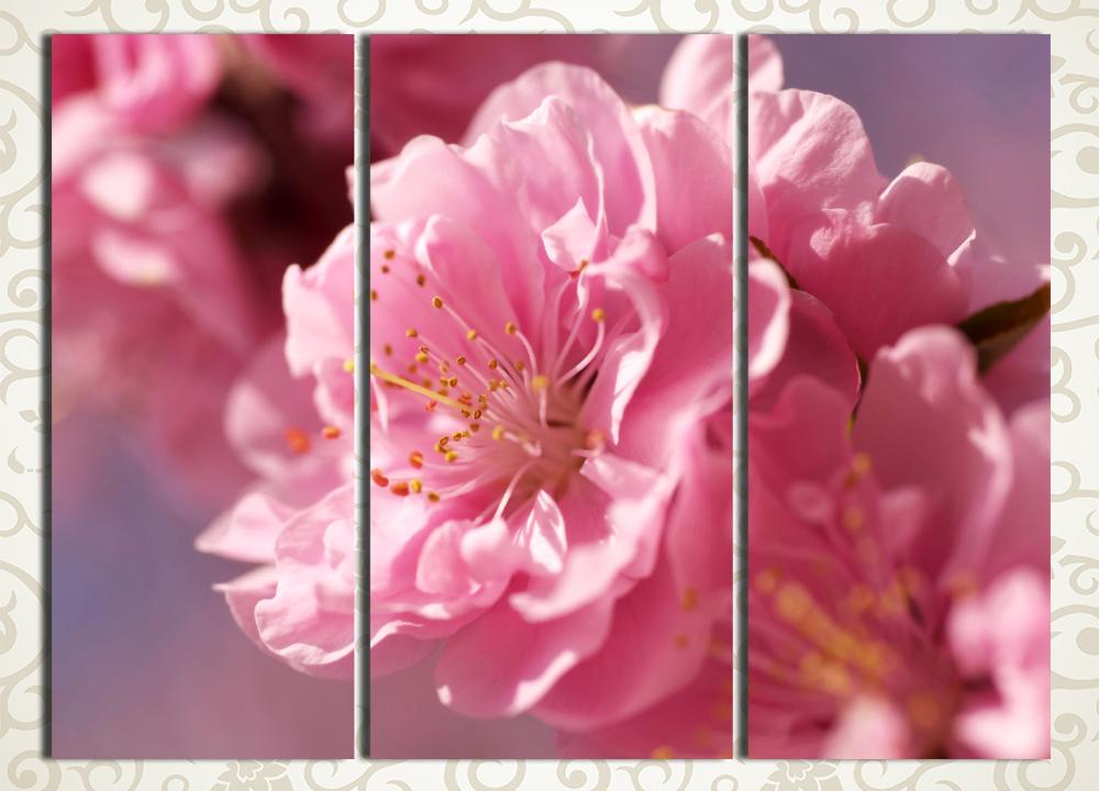 Модульная картина Цветок сакурыЦветы и фрукты<br>Отличным способом подчеркнуть тонкий вкус хозяйки дома станет модульная картина «Цветок сакуры». Полотно изображает пышное соцветие легендарного символа Страны восходящего солнца, картина выдержана в нежно-розовых тонах. Картина состоит из 3 вертикальных сегментов, при этом ее общая компоновка – квадрат. Это позволяет без труда разместить изображение на любой стене. Строгий контроль качества сборки картины предотвращает появление брака или дефектов.<br>