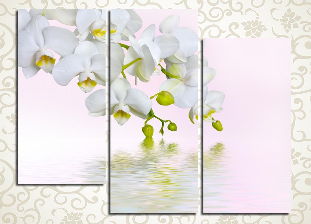 Модульная картина Отражение белой орхидеи