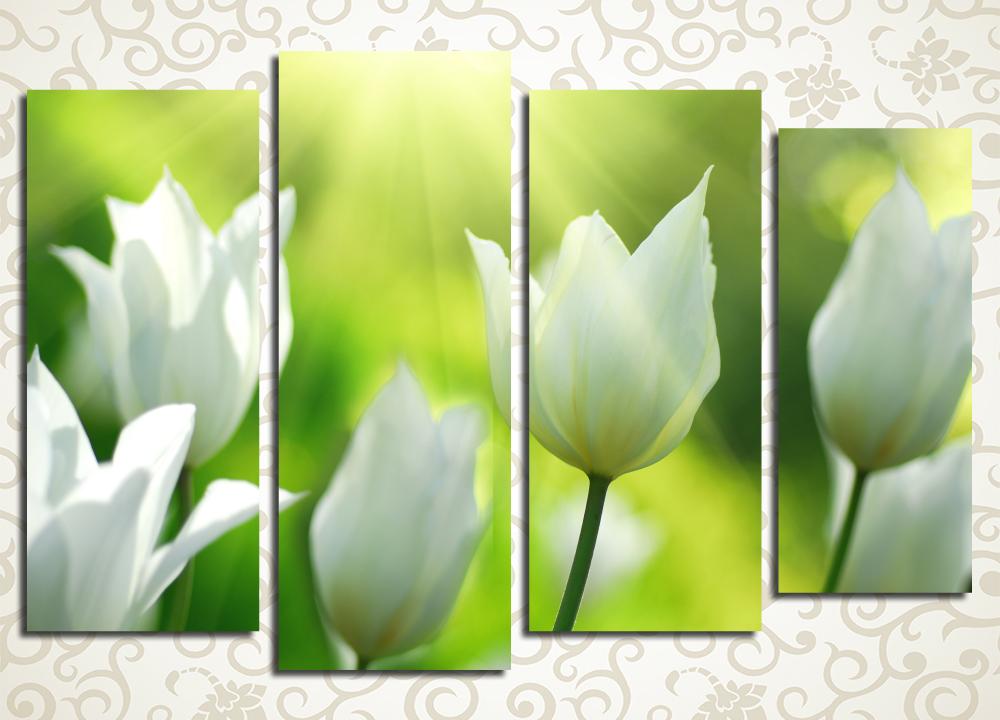 Модульная картина Тюльпаны в лучах солнца