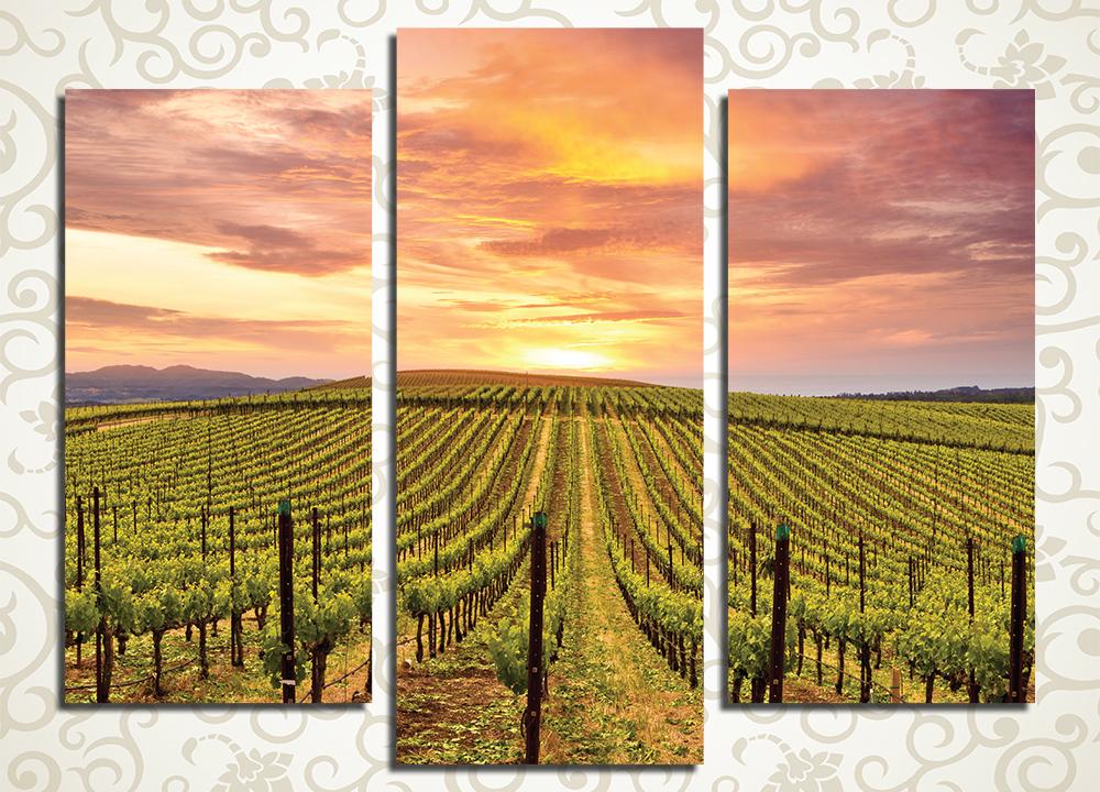 Модульная картина Виноградники на закате