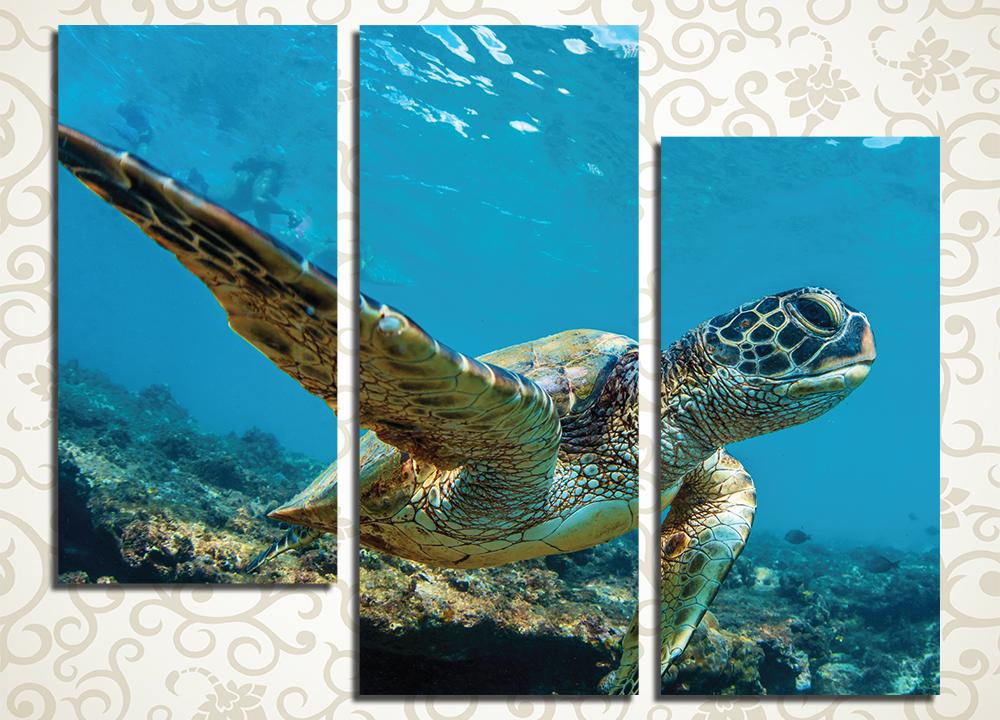 Модульная картина Морская черепаха