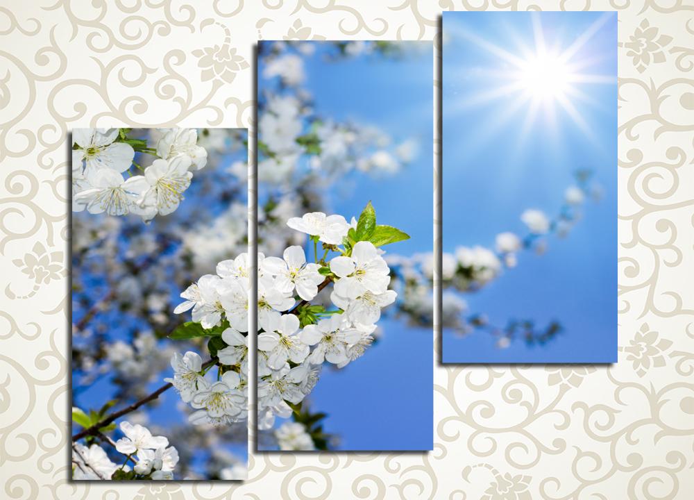 Модульная картина Цветы яблони в лучах солнца