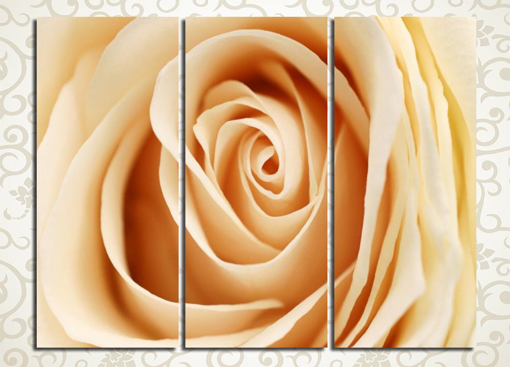 Модульная картина Бутон чайной розы