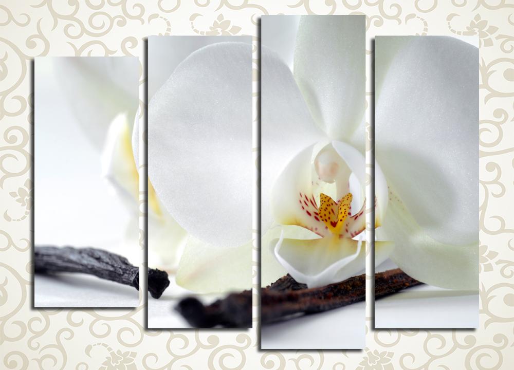 Модульная картина Цветок белой орхидеи