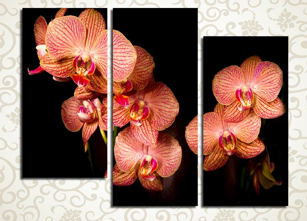 Модульная картина Разноцветные орхидеиЦветы и фрукты<br><br>