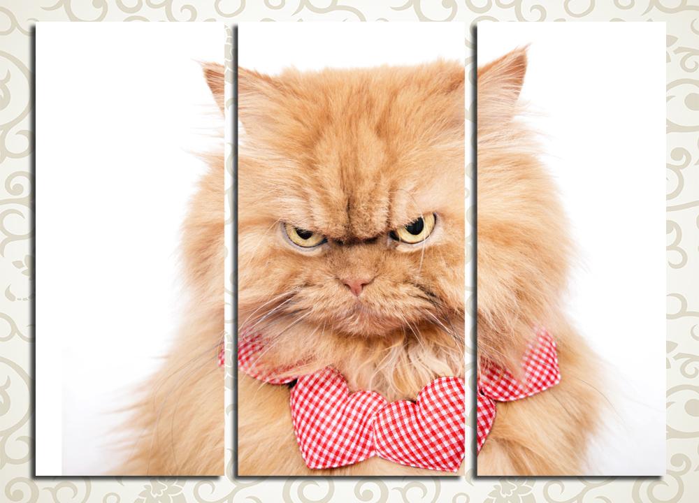 Модульная картина Серьёзный кот