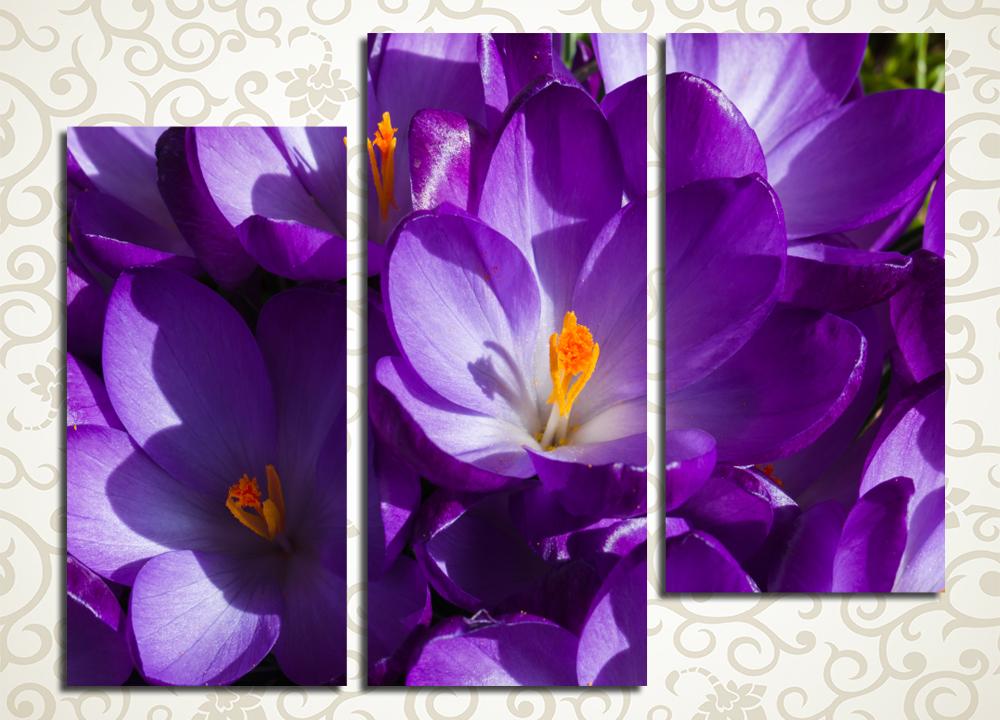 Модульная картина Букет фиолетовых крокусов