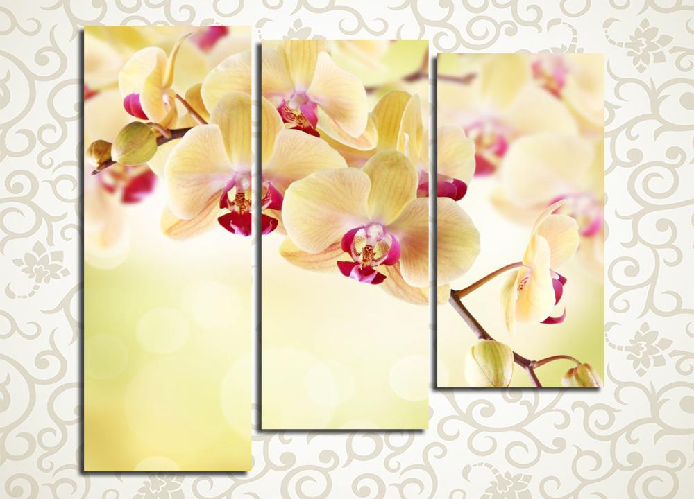 Модульная картина Персиковые орхидеи