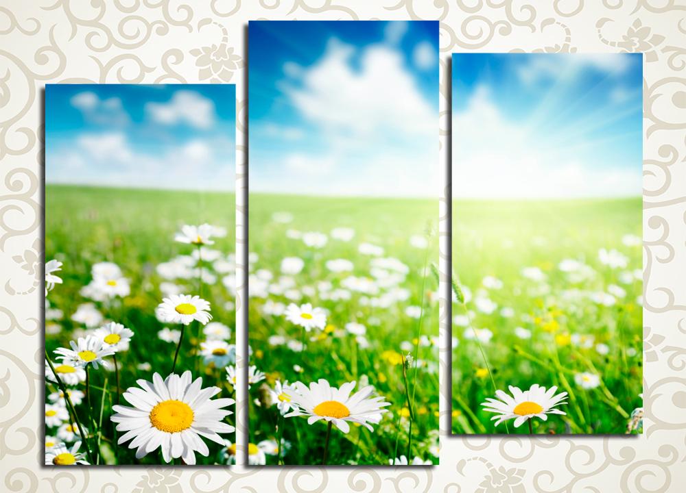 Модульная картина Солнечное ромашковое поле