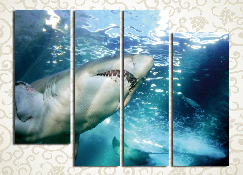 Модульная картина Акула<br>