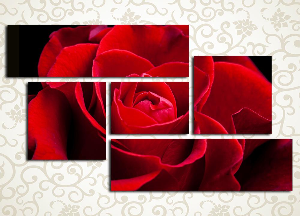 Модульная картина Бордовая роза