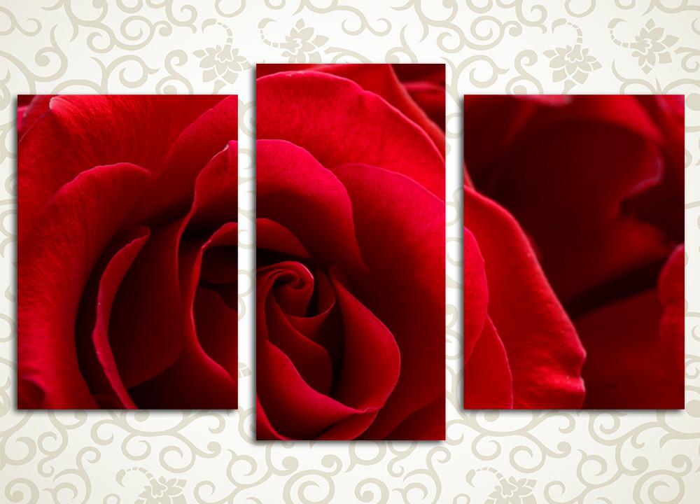 Модульная картина Прекрасная роза