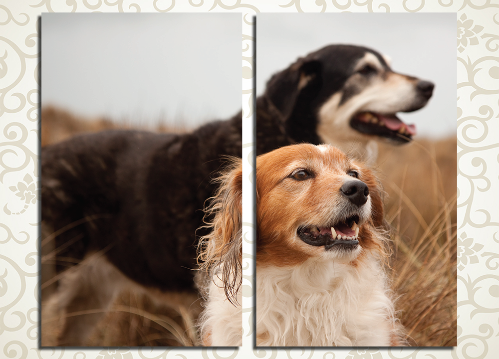 Модульная картина Пастушья собака