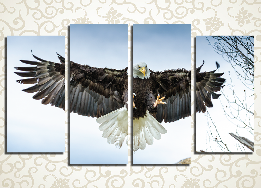 Модульная картина Белоголовый орел